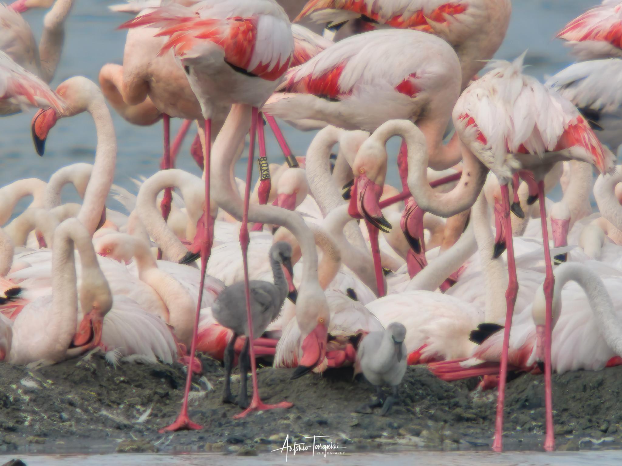 Eco Safari Tour