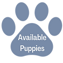 Available Puppies.png