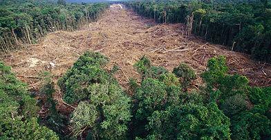rainforest-deforestation-1550x804.jpg