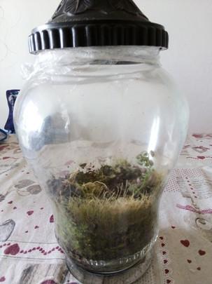Giardino in vaso