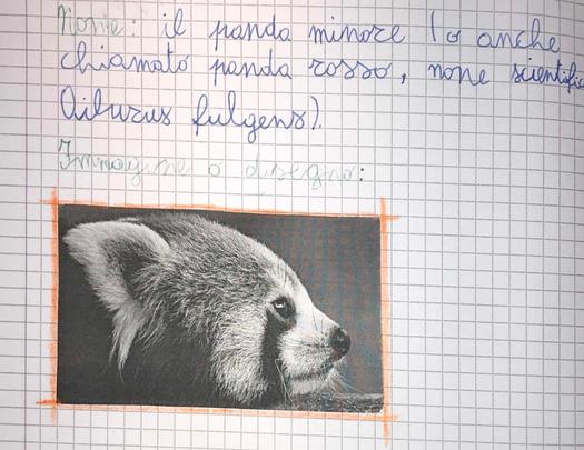 Federico, classe 4^, Lodi
