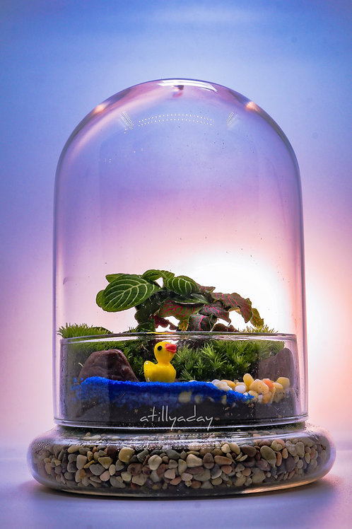 Customised Closed Terrarium C