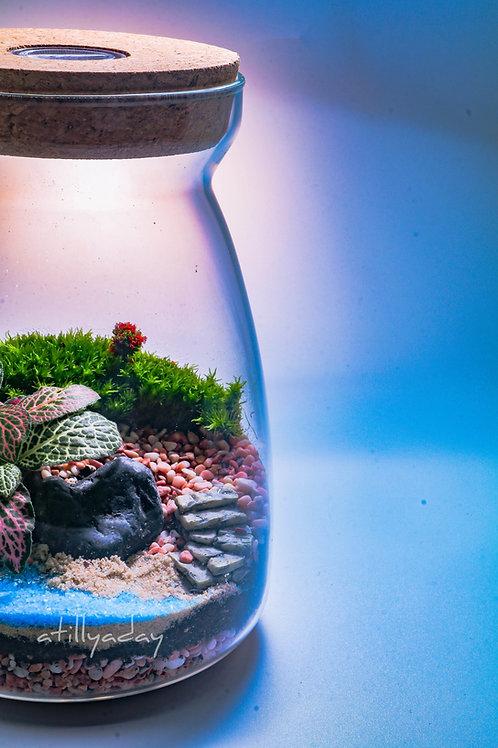 Customised Closed Terrarium Glass Jar