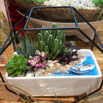 Dessert Beach Cactus