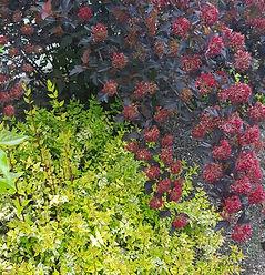 Vivid plant combinations