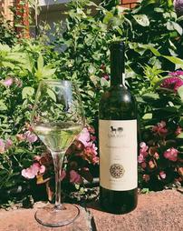 Umurbey//Sauvignon Blanc