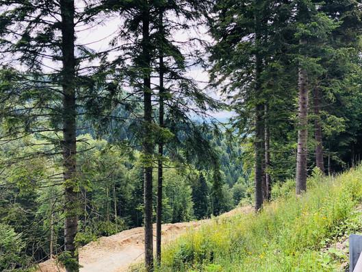 Bosnia Trail