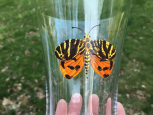 Water glass hand painted with butterfly. paint is top rack dishwasher safe
