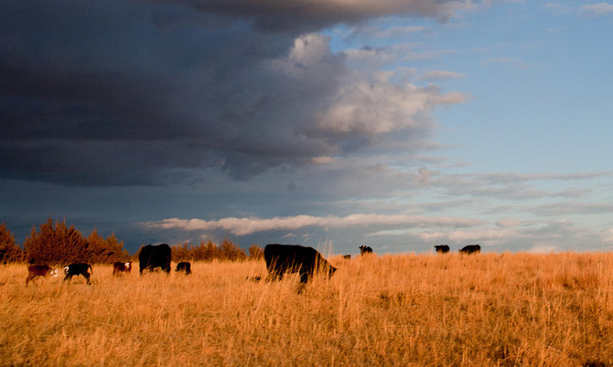 Is Your Ranching Activity for Profit?
