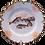 Thumbnail: Lura Reyer Fish Plate (set of two)