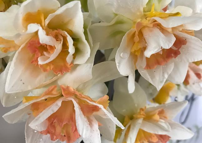 NarcissusReplete.JPG
