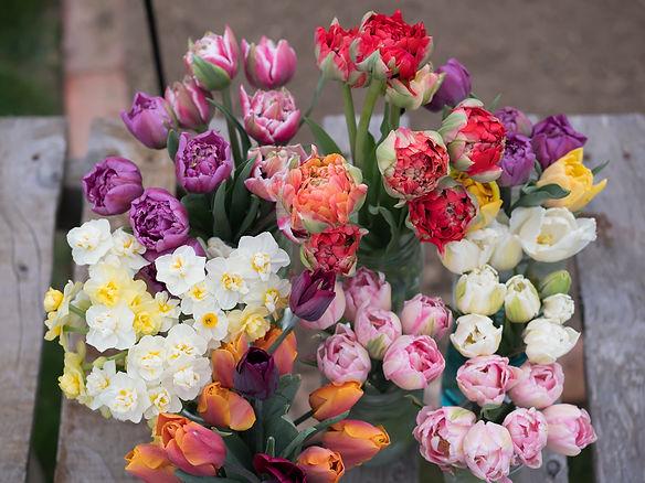 Spring2021_HarvestImage1_4.28.21.jpg