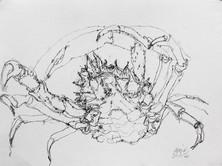 Araignée, 30 x 40 cm