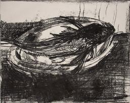 Monotype, grondin, 40 x 50 cm, 2017(3).j
