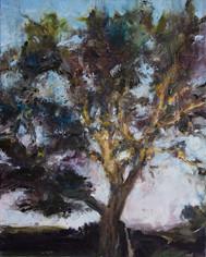 """""""Noyer, dernier soleil"""" 81 x 65 cm"""