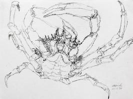 """Araignée de mer"" 30 x 40 cm"