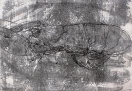 Monotype, homard, 35 x 50 cm, 2019_edite