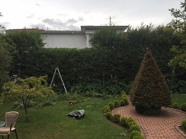 gardener, garden maintenance, hedge trimming, Sandy Bay