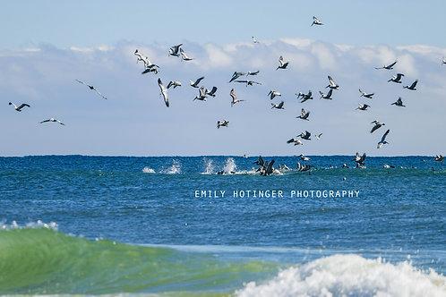 Swan Dive