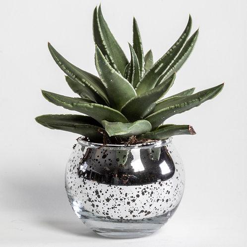 Agave Mini Succulent