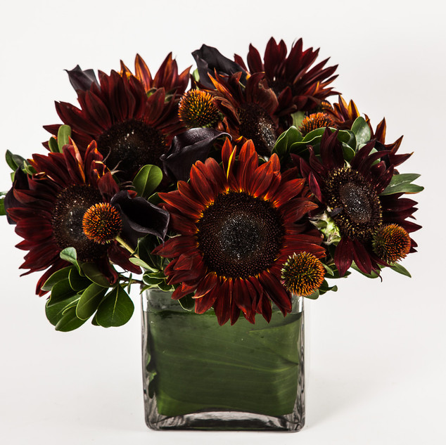 Brown Sunflowers