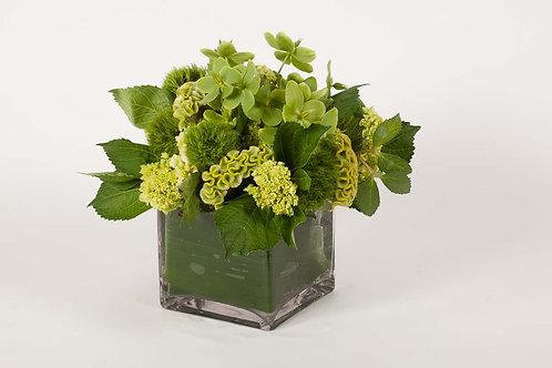 Green Hellebores, Celosia & Trix