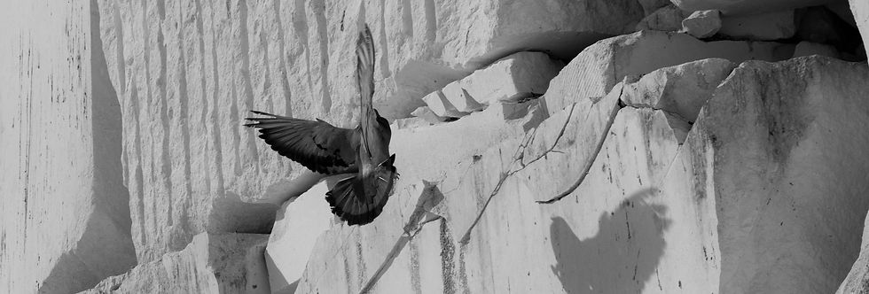 piedra-paloma.jpg