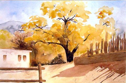 trees Mexico.jpg