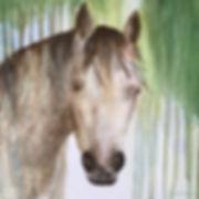Horse Play   20x20 Acrylic  $200.jpg