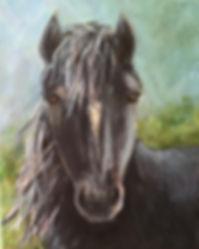 Horse Stiffney.jpg