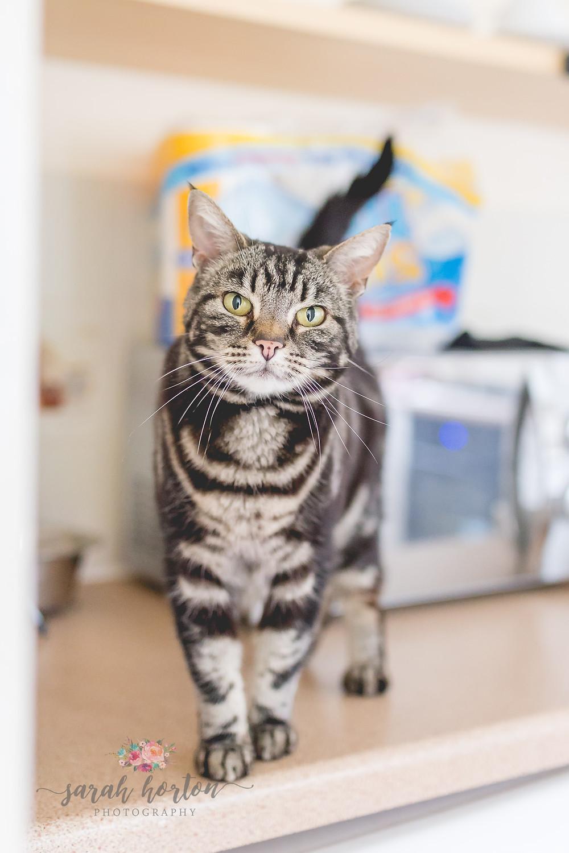 Nantwich cheshire wedding photography cat