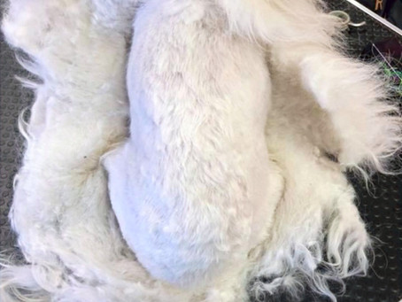 Brushing your dog to avoid matting