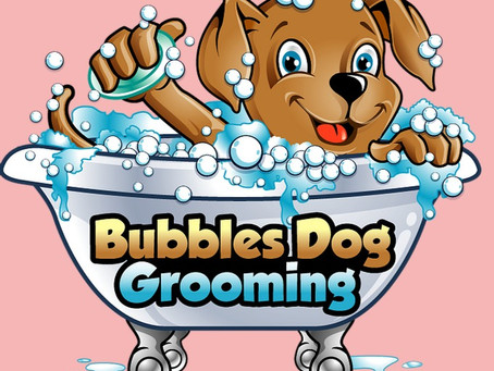 What Questions Should I Ask a Dog Groomer?