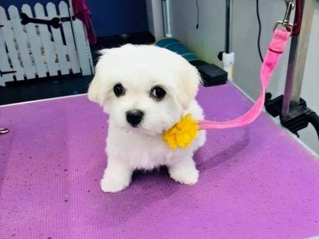 Why is it so expensive to get a dog groomed.