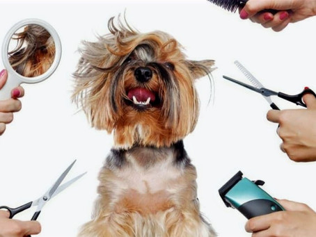 Why do dogs have to be groomed?