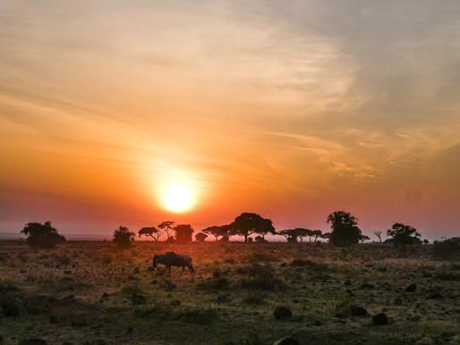 Africa Africa!
