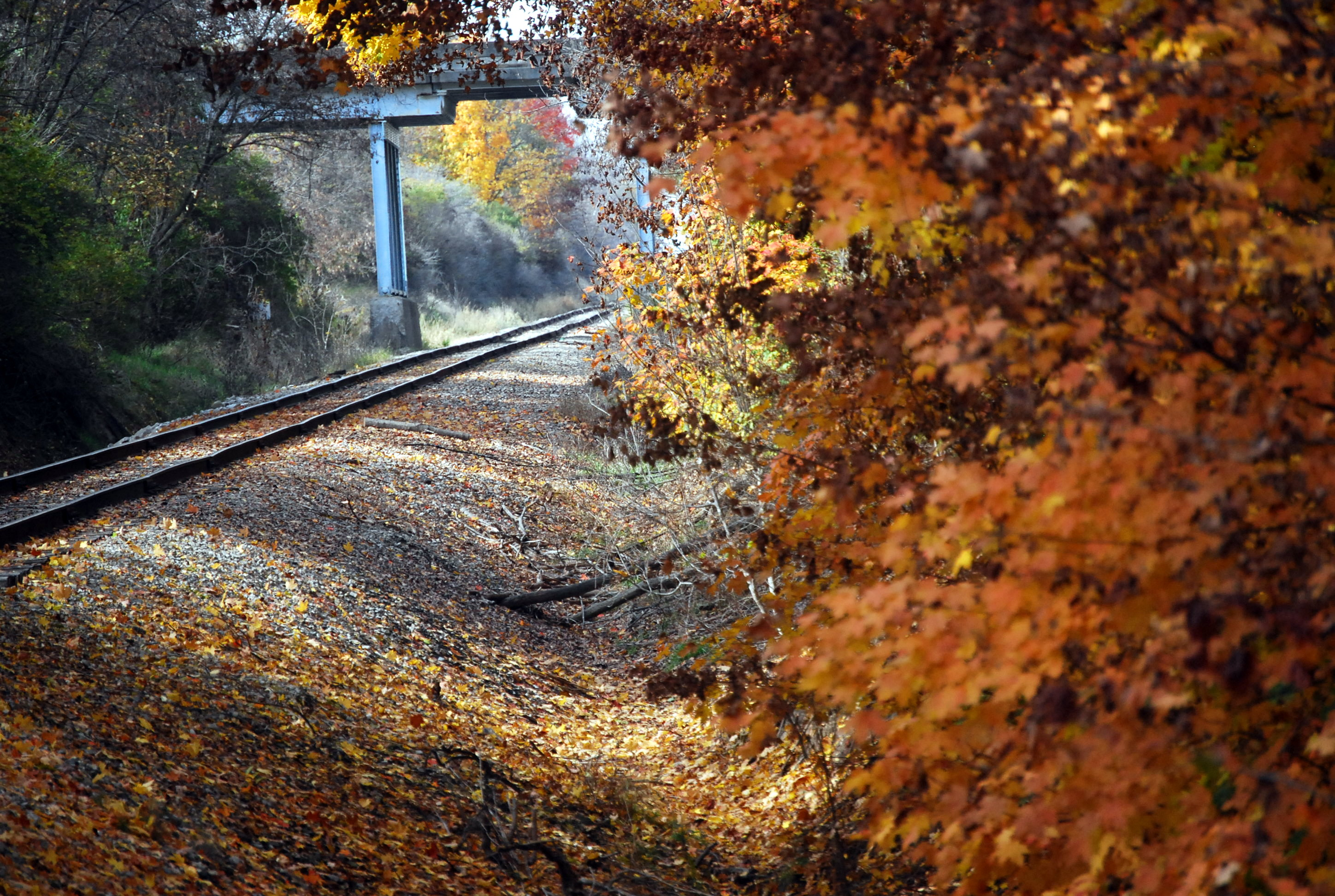 Vassar railroad fall.jpg