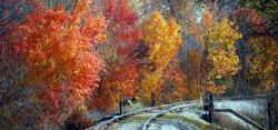 Vassar railroad fall 6.jpg