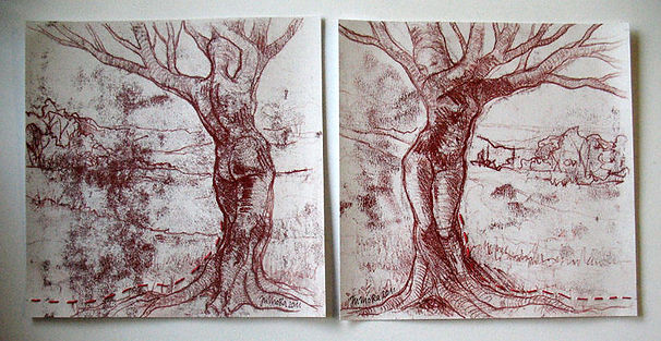 12.) 16.11.2011 Die Faszination des Baum