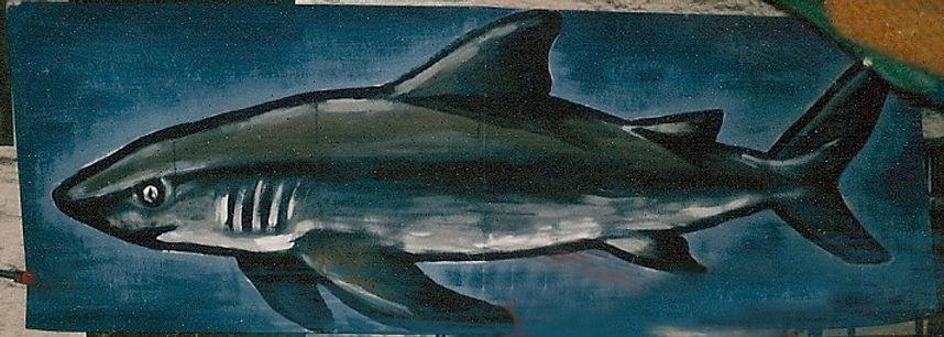 Haifisch.JPG