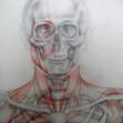 Anatomiestudie Kopf