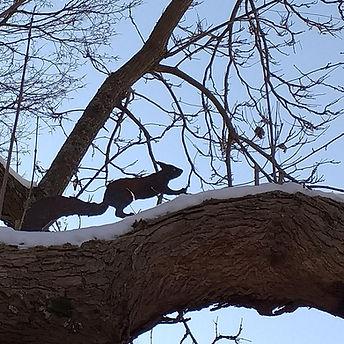 Eichhörnchen3.jpg