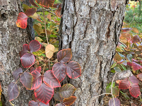 KEEP YOURSELF SAFE ON THE TRAILS!!! (Be aware of and learn about ticks and poison ivy)