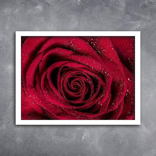 Quadro Close Rosa Colombiana
