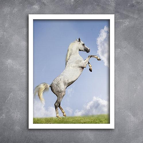 Quadro Cavalo Empinando