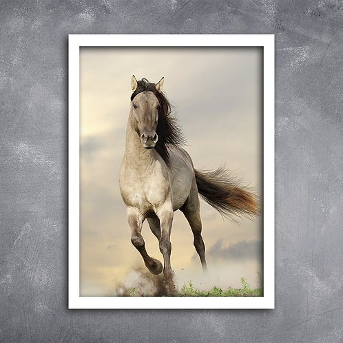 Quadro Foto Cavalo Correndo