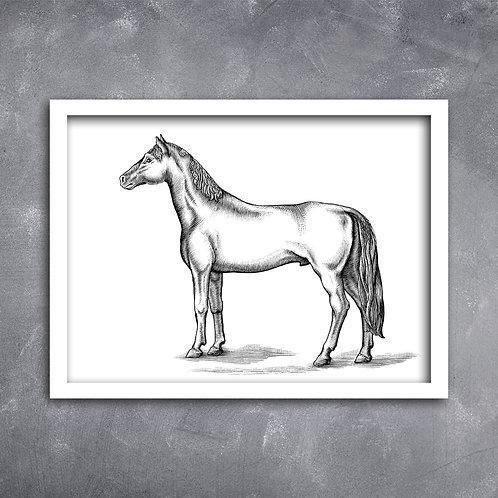 Quadro Cavalo Ilustração Pb