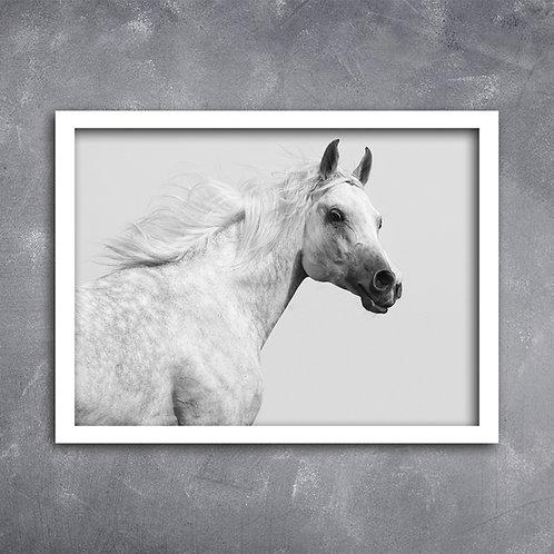 Quadro Cavalo Turco