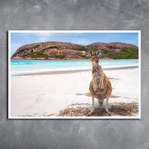 Quadro Canguru  Austrália
