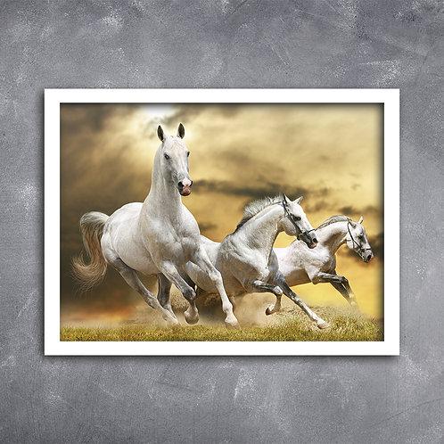 Quadro Foto Cavalos Correndo